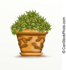 succulent plant in vase decorated