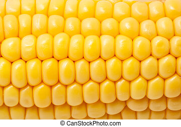 Corn - Macro photo of yellow corn background, healthy and...