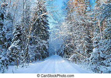 winter landscape with the forest and the road - beautiful...