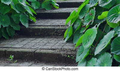 Rustic Steps With Green Plants Doll - Dolly shot of rustic,...