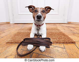 dog leather leash - dog with leather leash waiting to go...