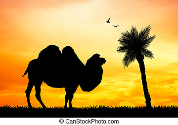 Dromedary in the desert - illustration of dromedary in the...