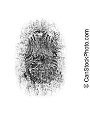 Dusted Fingerprint - An dusted forensic ink fingerprint on a...