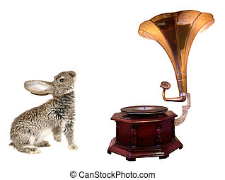 rabbit and gramophone - rabbit an old gramophone ornate with...