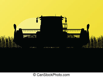 Agricultural combine harvester in grain field seasonal...