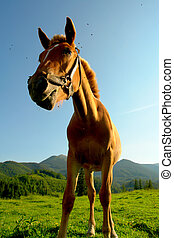 Horses on a pasture in summer...