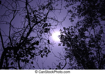 Foggy full moon - Foggy moon shining between trees