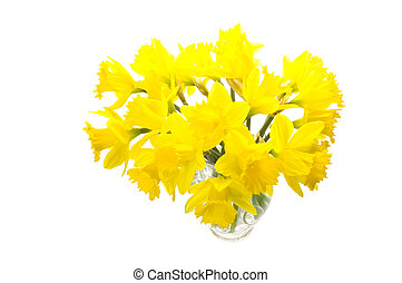 Bunch of daffs - Beautiful fresh daffodils in a vase