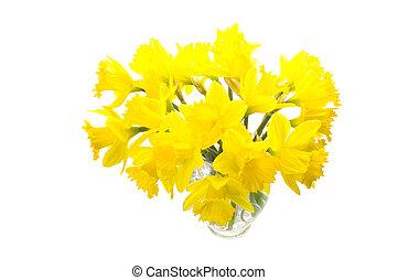 Bunch of daffs - Beautiful fresh daffodils in a vase
