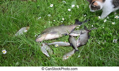 alive fish struggle grass - Cat try to steal thieve borrow...