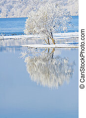 frosty trees - frosty tree in the water mirror