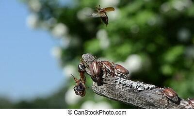group of beetles