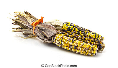 Multi Coloured Sweet Corn Cobs on white background