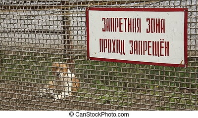 A dog behind the bars of the restricted area of the prison