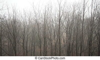 Tops of trees on grey sky background - Branches of trees in...