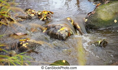 River rapid with rocks and autumn leaves - Fast river stream...