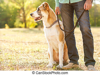 Man and central Asian shepherd walk in the park. He keeps...