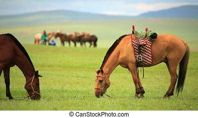 mongolian horses in vast grassland, mongolia