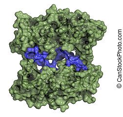 BRCA1 (BReast CAncer type 1 susceptibility, BRCT domain) DNA...