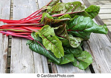 Swiss Chard - Green and red colored swiss chard in a garden