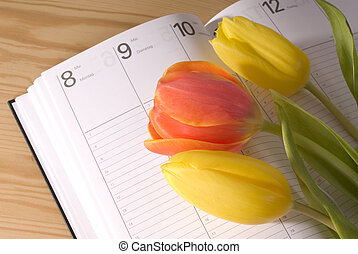 mothers day - tulips on a calendar, mother\'s day date