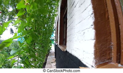 Passage between a lawn and a brick wall