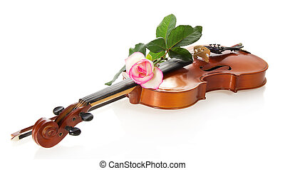 Violin and gentle rozy, isolated on the white