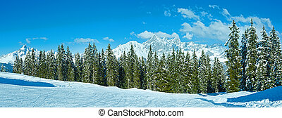 Winter mountain fir forest panorama - Winter mountain fir...