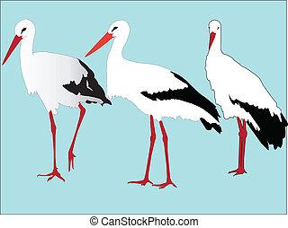 Cigüeñas,  vector,  -, Colección