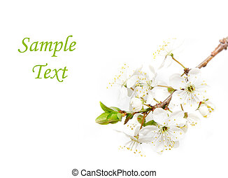 spring flowers over white with sample text