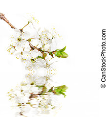 spring flowers over white