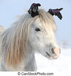 Funny grey pony with gloves in winter - Funny grey pony with...
