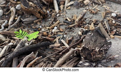 Green Plant Among Dead Wood Dolly - Dolly shot of a small,...