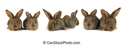 six grey rabbit - grey rabbit n a white background