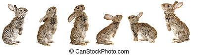 grey rabbit - Five, costing grey rabbit ?n a white...