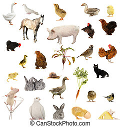 Animal farms on a white background