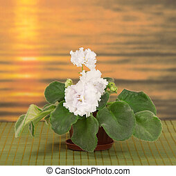 Pot with a violet against the sea