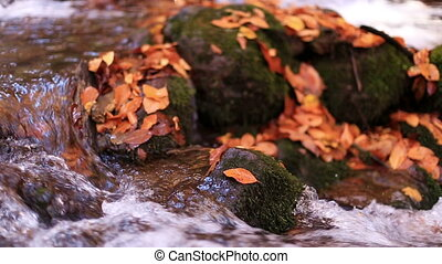 autumn - little river and autumn season