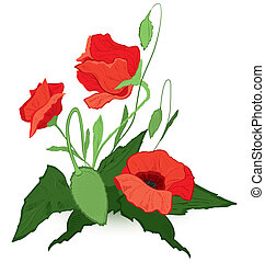 Red poppies - Vector illustration of red poppies isolated on...