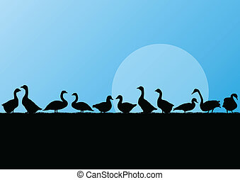 Farm duck and goose silhouettes in countryside landscape...