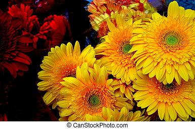 Gerberas - Flor gerbera em mercado