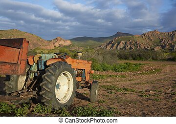 Red Tractor - Old tractor on a farm in the Oudtshoorn region...