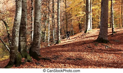 runner in forest - attractive man running at forest in...