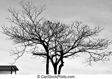 Shape of tree in Sillouettes