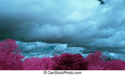 blue sky and purple trees infrared - clouds and trees,...