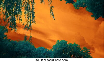 orange sky and cyan trees, infrared - clouds and trees,...