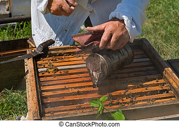 Beehive - A close-up of a beehive and hands of beekeeper...