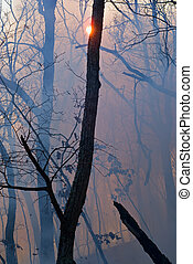 Fire in Forest 4 - A fire in leafy forest. Autumn. Russian...