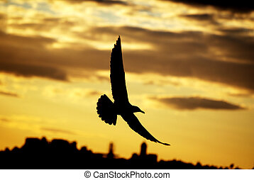 Gull in the Sunset - A picture of gull flying above docks.