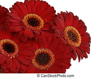bunch of red gerbera daisies